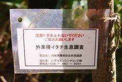 イタチ生息調査02 (1024x690)
