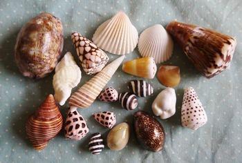 貝殻 (1024x691)