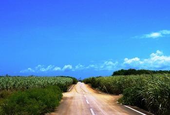 牧山から渡口への道 (1024x692)
