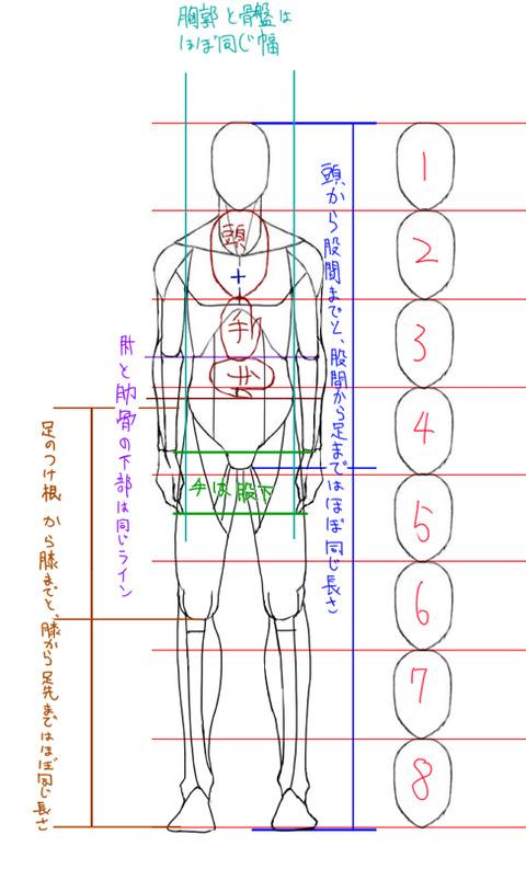 この図は8頭身ですが、普通の ...