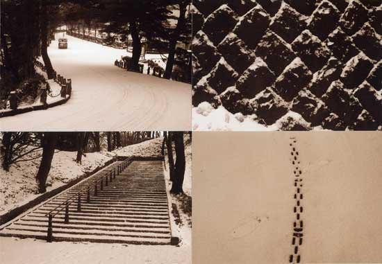 秋田の雪 東京の雪