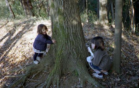 小春日和Vol.237 森の散歩