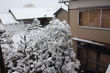 小春日和vol.523 雪の日の連続写真