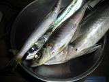 Fish1228