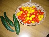 824収穫