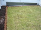 三鷹個人邸緑化
