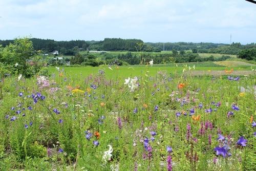 野の花ガーデン2