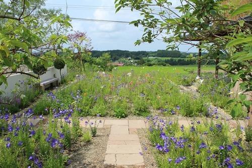 野の花ガーデン1