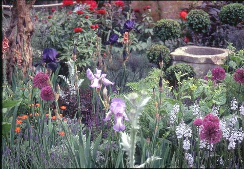 英国ガーデン 5