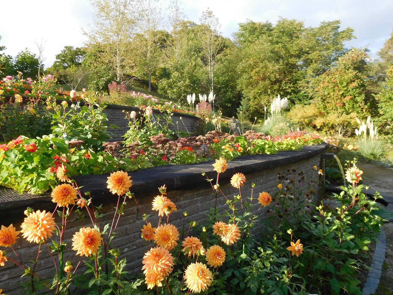 秋ですね!@銀河庭園 : 吉谷桂子のガーデニングブログ