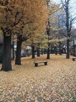 秋の豊田5
