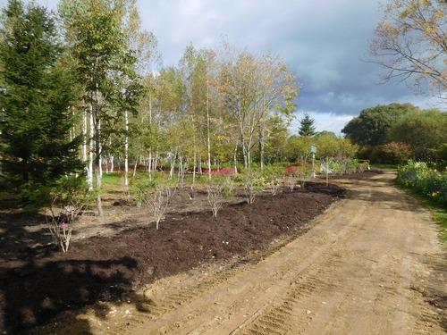 植え床の様子工事10月4日 002