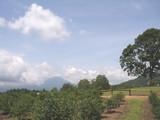 御嶽山ブルーベリー畑