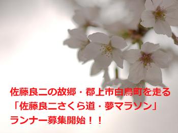m_sakurayume