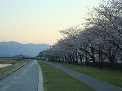 2010sakura2 011