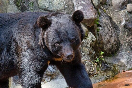 秋田県警「拳銃でクマは倒せない」