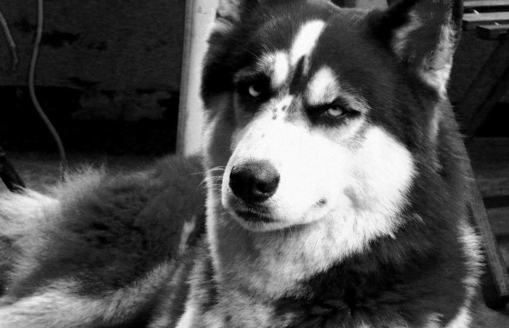 犬が毎日マーキング → 照明柱が腐って倒れ女児が怪我