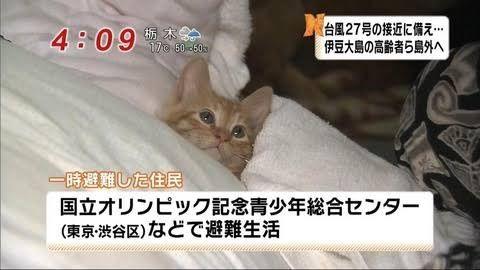 猫の可愛い画像クレメンス