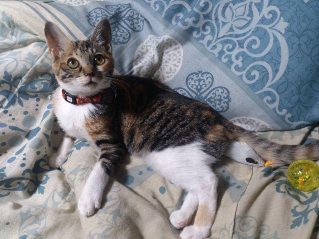 ニートに拾われた猫すくすく育つ