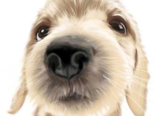 2次元 犬耳って最高に可愛いよね!萌画像まとめ 30枚