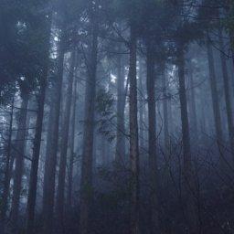 【謎すぎる】北海道の森の中で見つけた円形の空間。その中心にコレがあった…
