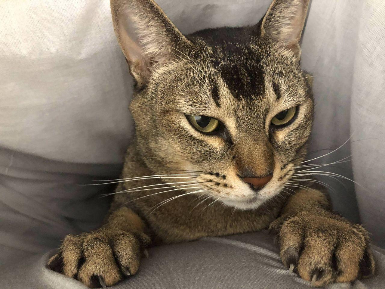 【朗報】ワイと猫、仲良くベッドでゴロゴロ中