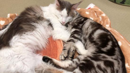 ネッコ「一緒に寝るぞ」夜勤ワイ「ダメです」