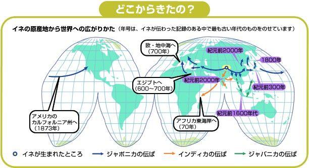 【悲報】ヨーロッパに米が来たのが西暦700年で、北海道に米が来たのが西暦1800年って……