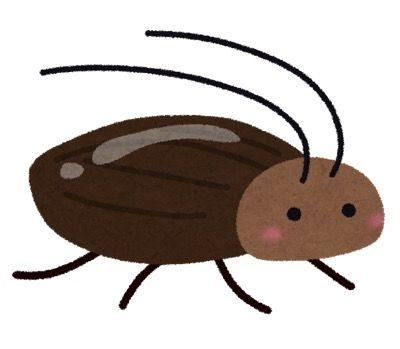 ゴキブリが怖すぎるからむしろ飼ってみた結果