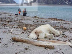 ソーシャルメディアで批判殺到! ドイツのクルーズ船、絶滅危惧のホッキョクグマを射殺