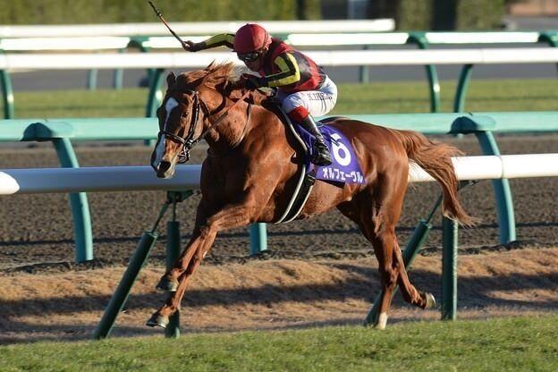 【悲報】スミヨンさん、外枠の馬で内に入れながら直線でうっかり大外ぶん回してしまう