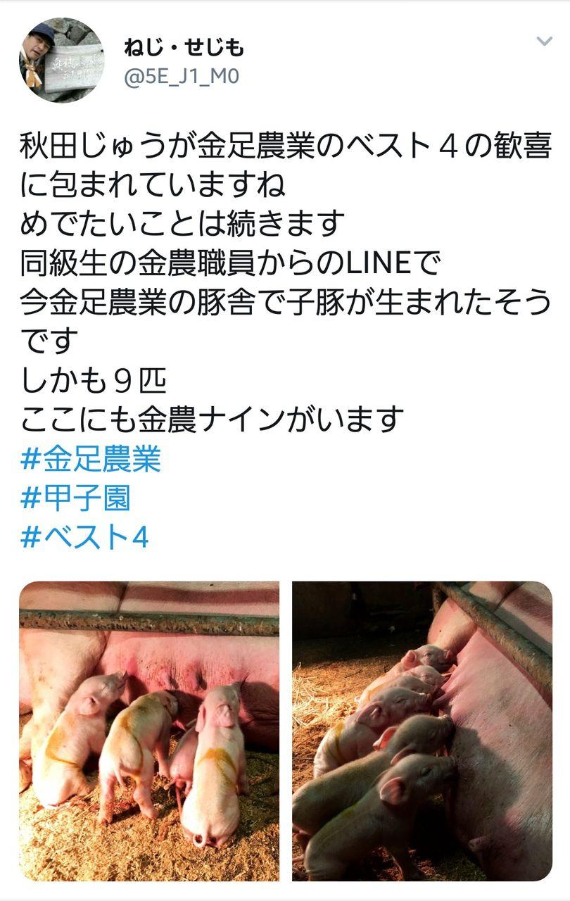 【朗報】金足農業、このタイミングで9匹の子豚が生まれる