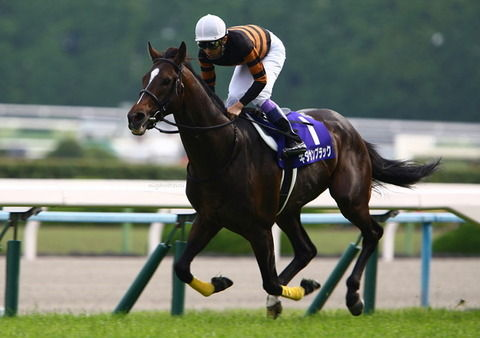 【競馬】キタサンブラックの適正距離議論