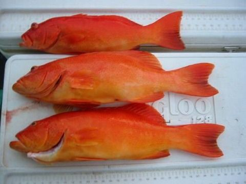 【画像】沖縄で魚釣りに行った結果wwwwwww