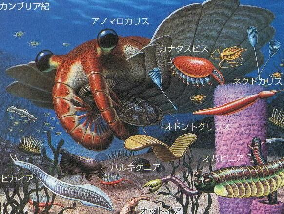 カンブリア紀の動物がうじゃうじゃいるプールに一時間浸かれたら一億円