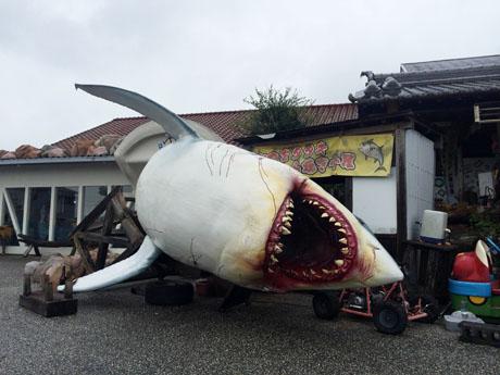 台風15号の威力で巨大なサメが飛ばされそのまま放置される