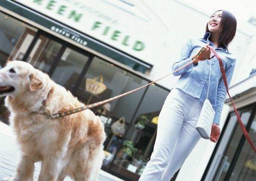 【画像】1年間散歩させなかった犬の末路wwwwwwwwwwwwwwwwwwww