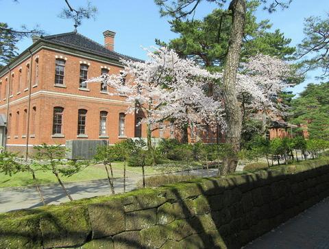 四高記念館の桜
