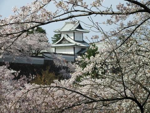 百間堀の桜並木から石川門