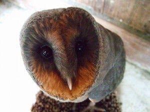 【画像あり】フクロウの顔って怖くね…?
