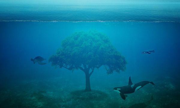 海の中にカーストがあったら最底辺にいそうな陰キャ生物wwwwww
