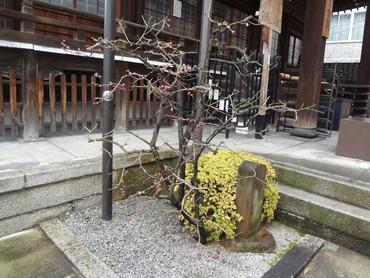 春、みつけました・和泉式部のお寺-誠心院