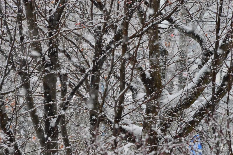 2018年01月02日 降雪 018