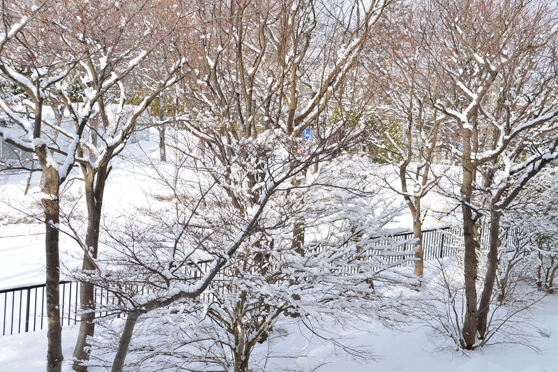 ・D800・2018・03・13 なごり雪 088