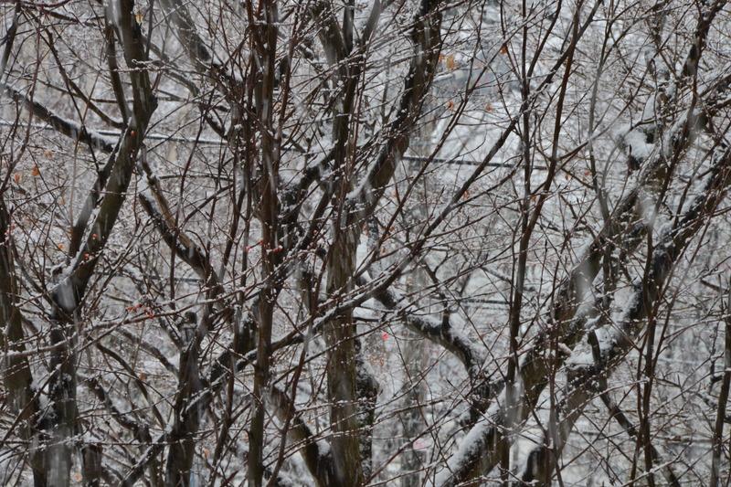 2018年01月02日 降雪 010