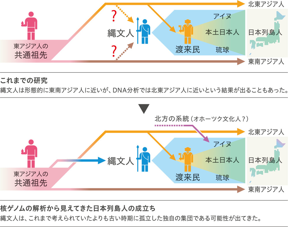 繩文人核ゲノム歴史神澤秀明