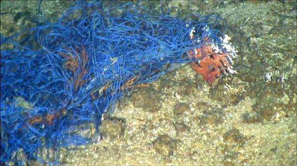 小笠原珊瑚チャイナ漁網