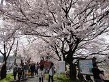 05_お花見