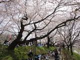 06_お花見