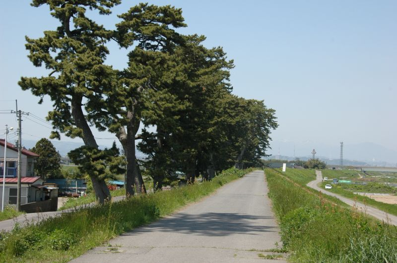 松の画像 p1_20